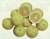 grapefruitp92ek