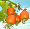merey fruta2
