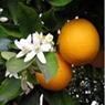 naranja cajera2