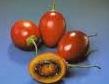 tomate arbol2